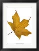 Framed Leaf Inflorescence II
