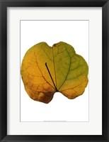 Framed Leaf Inflorescence III