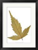 Framed Leaf Inflorescence IV