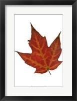 Framed Leaf Inflorescence V