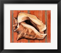 Framed Shell on Stripes I