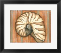 Framed Shell on Stripes IV - light