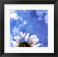 Daisies III Framed Print