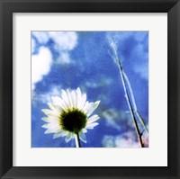 Daisies IV Framed Print