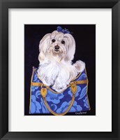 Maltese Clutch Framed Print