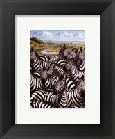 Framed Zebra Gathering
