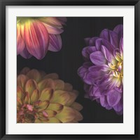 Framed Purple Dahlia I