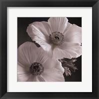 Poppy Study I Framed Print