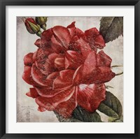 Framed Rose Flower