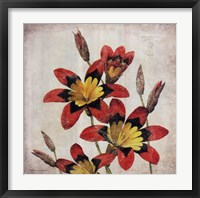Red Lily Flower Framed Print