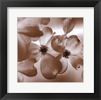 Dogwood Framed Print