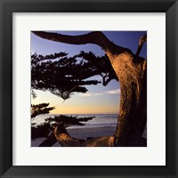 Framed Carmel Sunset II