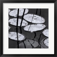 Lily Pads, Sunrise Framed Print