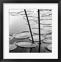 Framed Lily Pads, Dusk