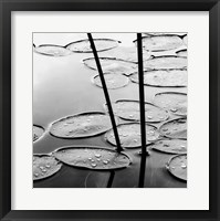 Lily Pads, Dusk Framed Print