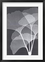 Ginkos I Framed Print