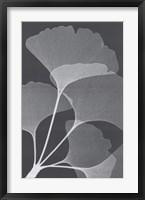 Ginkos II Framed Print