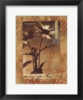 Gypsy Dasies Framed Print
