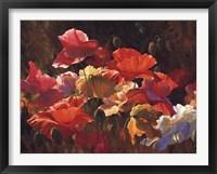 Framed Poppies In Sunshine
