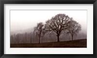 Framed Autumn Fog
