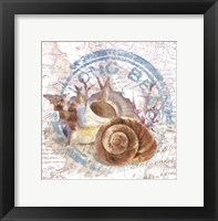 Framed Seashells By The Seashore I