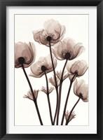 Framed Windflowers