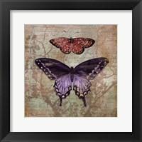 Framed Vintage Butterflies IV