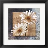 Daisy Field I Framed Print