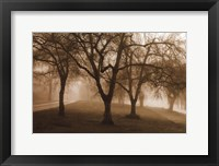 Framed Misty Park