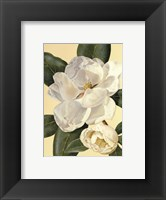Morning Magnolia Framed Print