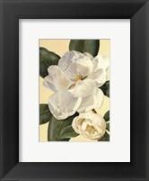 Framed Morning Magnolia