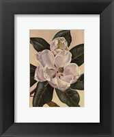 Afternoon Magnolia Framed Print