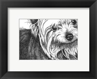 Framed Bella the Yorkie