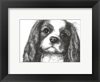 Framed Louie the Cavalier King Charles