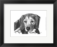 Framed Lindy the Beagle
