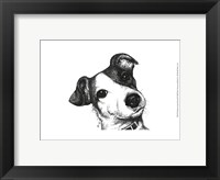 Framed Robbie the Jack Russell