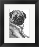 Framed Ralph the Pug