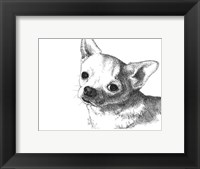 Framed Bruiser the Chihuahua