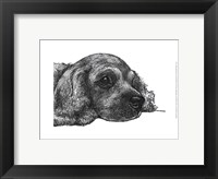 Framed Charlie the Cocker Spaniel