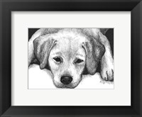 Framed Kailie the Yellow Lab