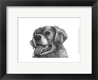 Framed Amber the Golden Retriever
