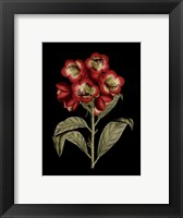 Framed Crimson Flowers on Black III