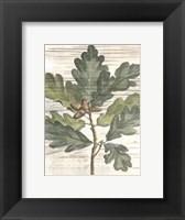 Framed Small Weathered Oak Leaves I