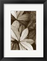 Framed Garden Textures I