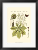 Framed Small Bertruch Horse Chestnut (P)
