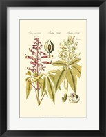 Framed Small Bertruch Yellow Buckeye (P)