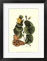 Framed Sm Catesby Butterfly&Botan. I (P)