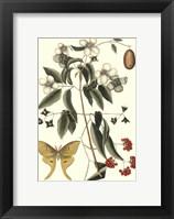 Framed Sm Catesby Butterfly&Botan. III (P)
