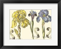 Framed Small Iris in Bloom I (P)