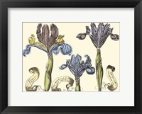 Framed Small Iris in Bloom II (P)